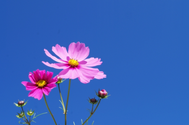 空と花の色というブログ