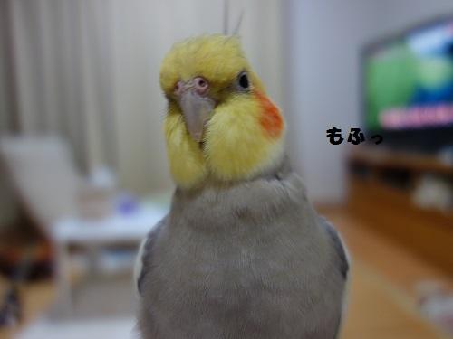 DSC03291