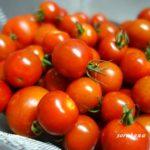 かさ増ししないでかさ減らす節約 ミニトマトの大量消費