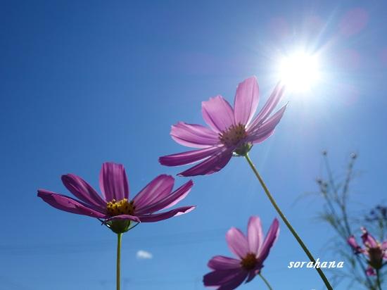 空と花の色
