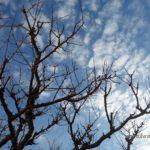 桜切るバカ梅切らぬバカ 梅の木の剪定は子育てに似ている