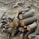 庭木の伐採にかかった費用とシルバー人材センターに依頼するメリット・デメリット