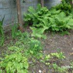 実家の片づけは家の中だけではない 長年放置していた庭の大量の鉢が怖ろしい事態に