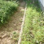 庭の雑草対策 夏の草ボーボーに除草剤を撒いてわかった私の未来設計図