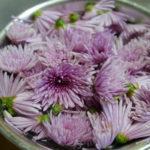 秋を味わう 食用菊【もってのほか】の風景