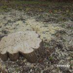 庭木の伐採 父が遺した庭を変えていく決意